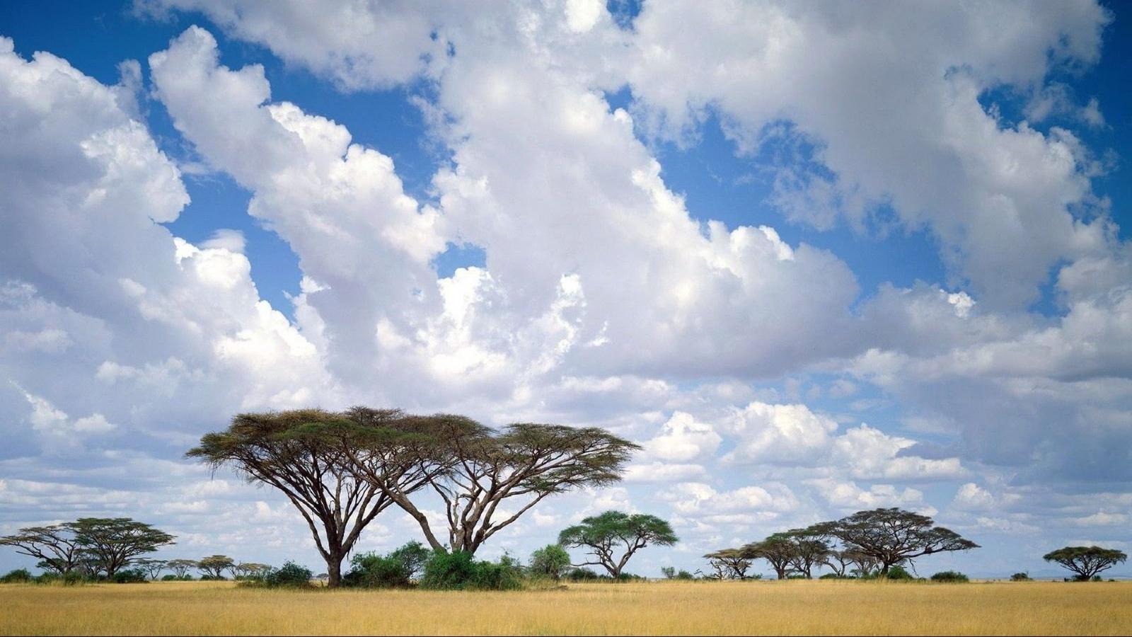 Картинки для доу природа африки