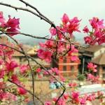 nepal2011-25