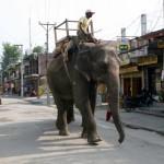 nepal2011-67