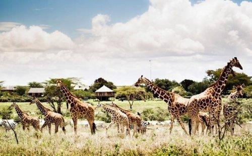 Новое развлечение Вьетнама «Vinpearl Safari Phu Quoc»