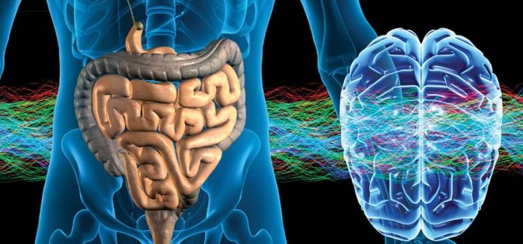 Энтеральная нервная система – второй мозг человека