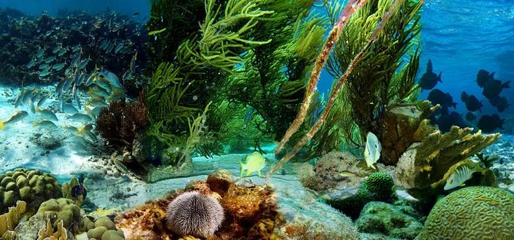 Океан неизведанного: удивительный факты