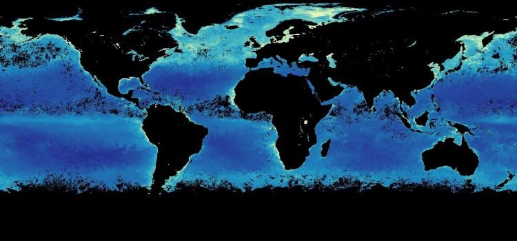 Хлорофилл в океане: карта