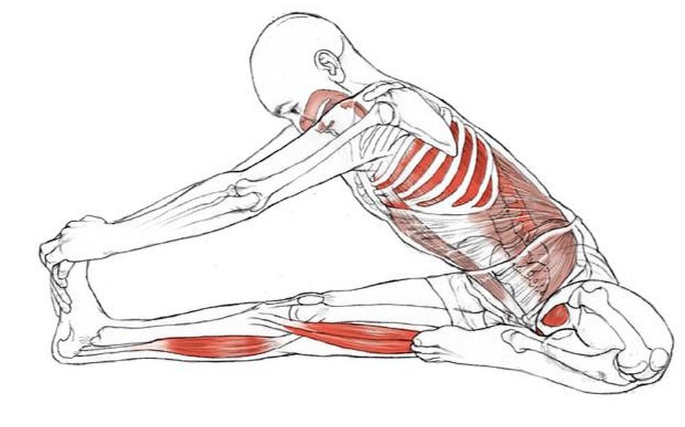 Физиология йоги. Маха-мудра