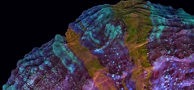 Жизнь кораллов показали на видео вускоренной съемке