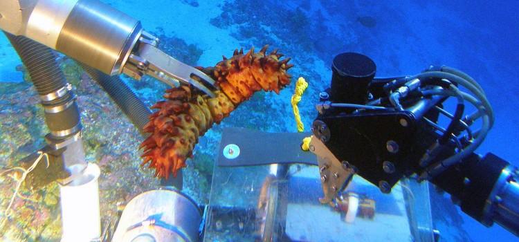 У Гавайских островов обнаружен глубоководный коралловый риф