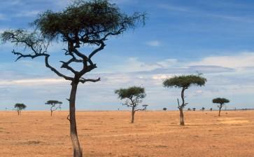 Африка — Кения