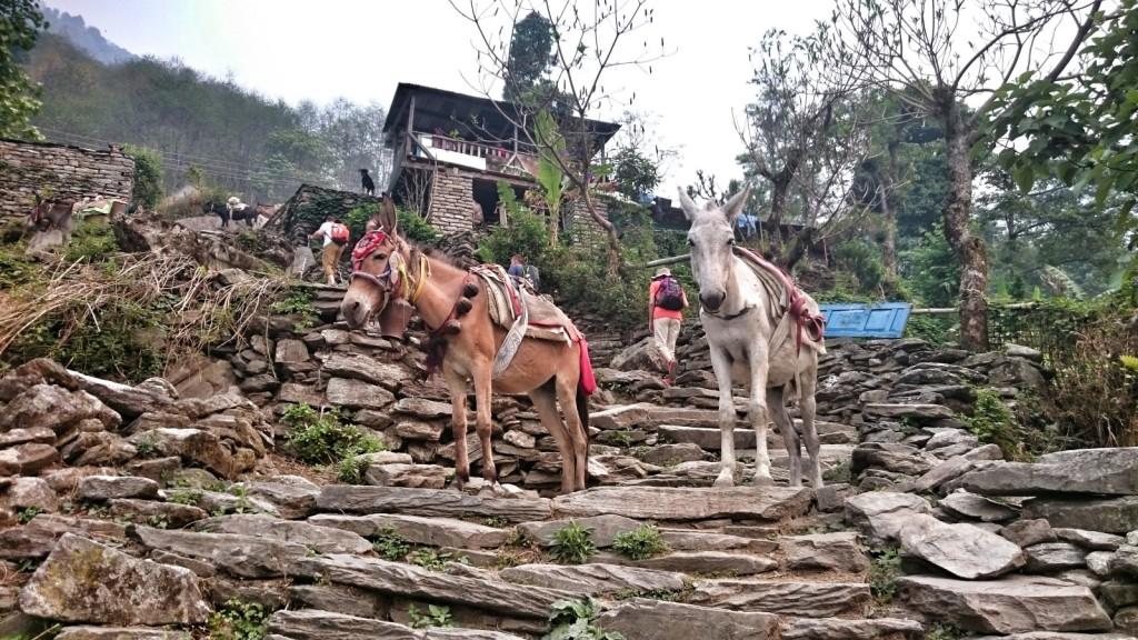 nepal27
