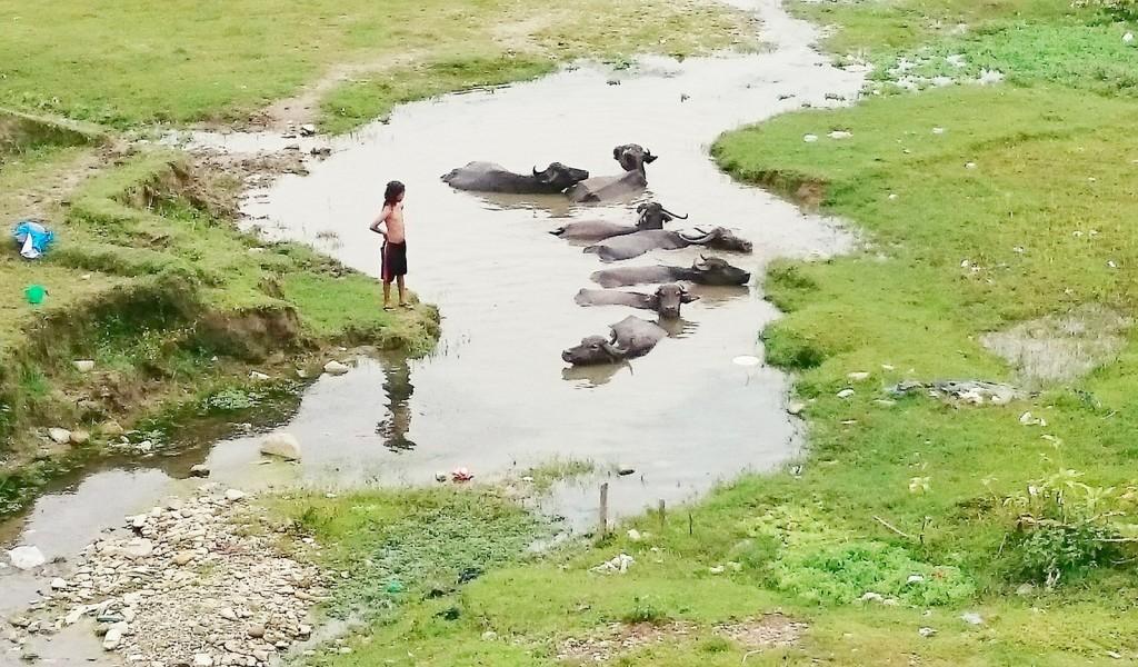 nepal61