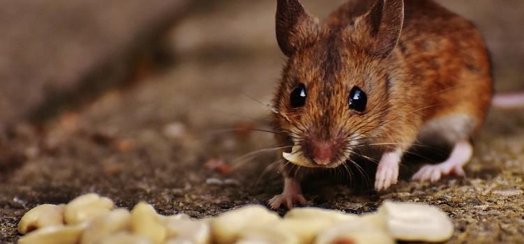 Эксперимент ученых: можно ли научить животных осознанности?