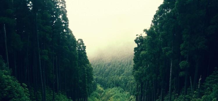 Обнаружены миллионы гектаров «потерянных» лесов