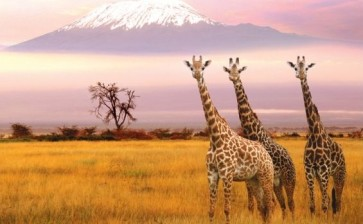 Национальные парки Африки +