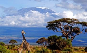 Восхождение на Килиманджаро c Кириллом Ржаным (маршрут Мачаме)
