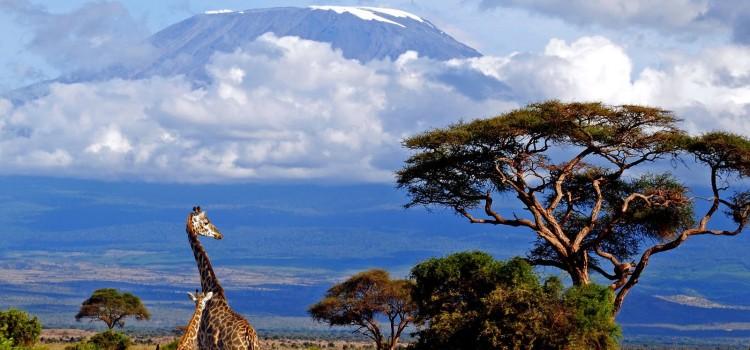 Восхождение на Килиманджаро c Кириллом Ржаным