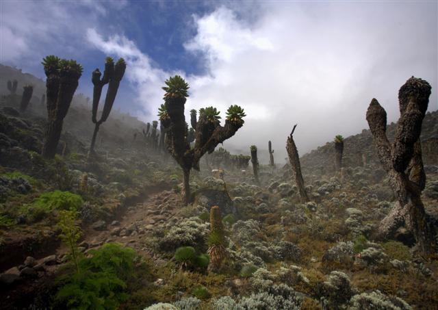 kilimandjaro-13