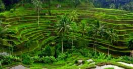 Новые туры: Алтай и Бали