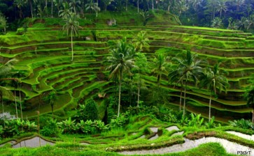 Новые туры: Бали, Америка и Алтай