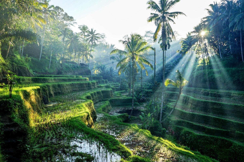 Началась покупка авиабилетов на Новогодний тур на Бали! - yogatour.info